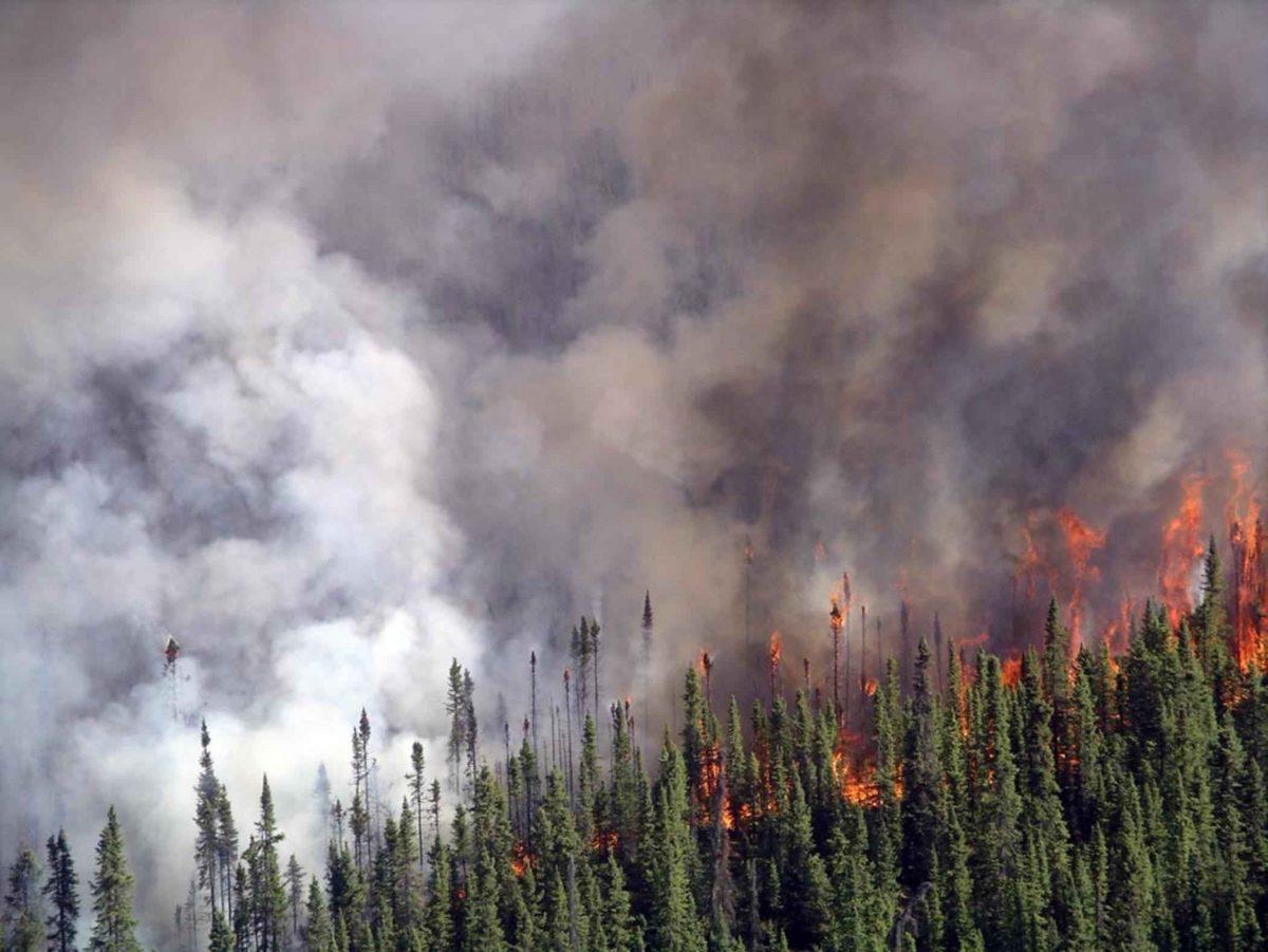 boreal wildfire